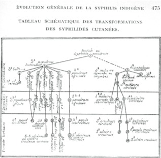 Evolution générale de la syphilis indigène